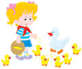Girl feeding ducklings little feeds a white duck and small yellow Royalty Free Stock Photo
