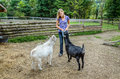 Girl Feeding Goats Stock Photography