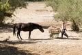 Girl feeding horses Royalty Free Stock Photo