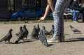 Girl feeding of the pigeons, birds Royalty Free Stock Photo