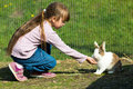 Girl feeding rabbit Royalty Free Stock Photo