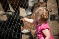 Girl Feeding Zoo Animals