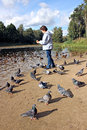 Girl feeds ducks and pigeons birds on the shore of the pond Royalty Free Stock Photo