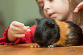 Girl and guinea pig Royalty Free Stock Photo