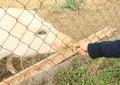 Girl hand feeding pig Royalty Free Stock Photo