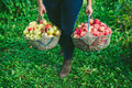 Girl holding two large baskets of apples Royalty Free Stock Photo