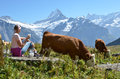 Girl with a jug of milk and a cow jungfrau region switzerland Royalty Free Stock Photography