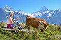 Girl with a jug of milk and cows jungfrau region switzerland Royalty Free Stock Photos