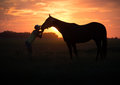 Girl kisses her horse at sunset Royalty Free Stock Photo