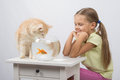 The girl looks like a cat wants to catch the goldfish happy six year old and sitting at table at fishbowl with Stock Photo