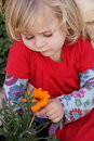 Girl with orange daisy Stock Image