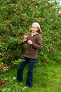 Girl picking apples Royalty Free Stock Photo