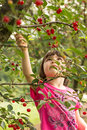 Girl picking cherries Royalty Free Stock Photo