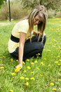 Girl picking dandelion Stock Images