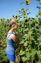 Girl picking flowers teenager sunflowers in a field Stock Photography