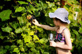 Girl picking grapes a a grape in to glass Royalty Free Stock Photography