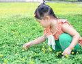 Girl picking the little flower a is a yellow in park Royalty Free Stock Image