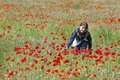 Girl with poppies touching on the meadow posing lots of red around her Royalty Free Stock Photography