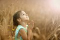 Girl prays in wheat field Royalty Free Stock Photo