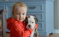 Girl and puppy toddler holding her new dog Stock Images