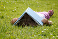 Girl reading in the grass Stock Image