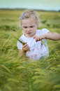 Girl in a rye field blond Royalty Free Stock Photos