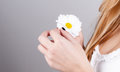 Girl`s hands holding a daisy Royalty Free Stock Photo