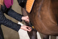Girl saddles her pony brown new forst Stock Images