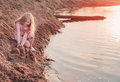 Girl in sandy beach happy Royalty Free Stock Photo