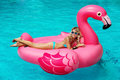 Girl sits on inflatable mattress flamingos Royalty Free Stock Photo