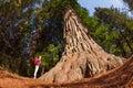 Girl standing near big tree in Redwood California Royalty Free Stock Photo