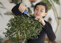 Girl trimming olive tree bonsai Royalty Free Stock Photo
