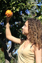 Girl under an orange tree Stock Photography