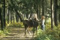 Girl walking horse on path Stock Image