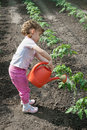 Girl watering  Seedling Tomato Stock Photography