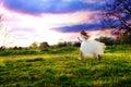 Girl wearing white dress running. Royalty Free Stock Photo
