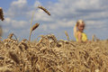 Girl in wheat field a stretching his arms to the sky Royalty Free Stock Images