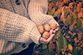 Girl with woolen sweater holding wallnuts in her hands Royalty Free Stock Photo
