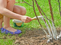 Girl working in the garden. Royalty Free Stock Photo