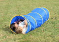 Girls in blue kids tunnel little lying for Stock Images
