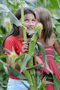 Girls in corn field Royalty Free Stock Photo