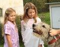 Girls - kids watching a dog Royalty Free Stock Photo