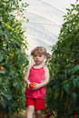 Girls picked tomatoes Royalty Free Stock Photos