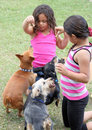 Girls playing with their dogs Stock Image