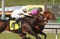 Gitano Hernando Wins the Goodwood Stakes Royalty Free Stock Photo