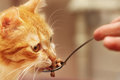 Giving fodder with a spoon to a red cat Royalty Free Stock Photos