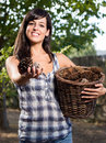 Giving pine cones in hand Stock Images