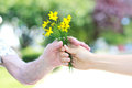 Giving yellow flowers to senior woman Stock Images