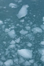 Glacial ice close up of floating on the water Royalty Free Stock Image