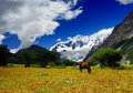 Glacier and horse the grazing in front of midui midui is located in the tibet people s republic of china it named one of china Royalty Free Stock Photos